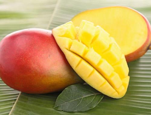 Was hat ein Mangobaum mit dem Aktienmarkt zu tun?